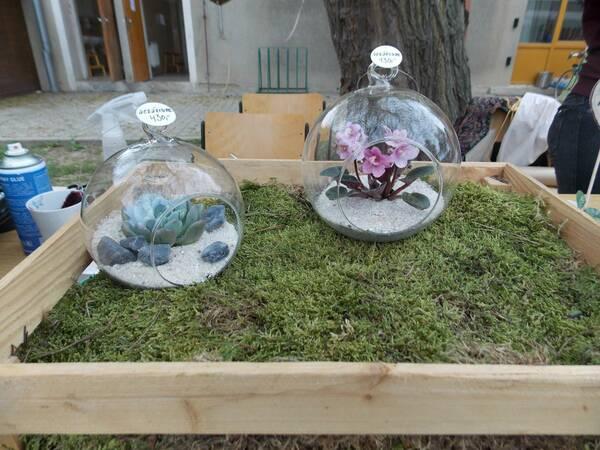Majiteľka Kvíti z lesa vyrába aj takéto teráriá / Autor: Maša Kalčoková